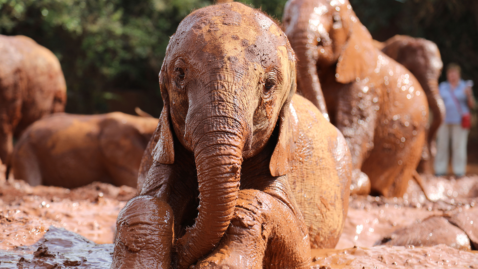 Orphaned elephants get new life in Kenya